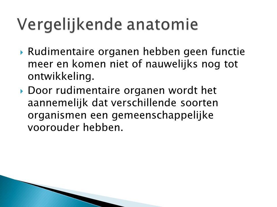  Analoge organen vertonen overeenkomst in functie.  Analogie berust niet op verwantschap  Overeenkomsten zijn ontstaan door aanpassing aan hetzelfd