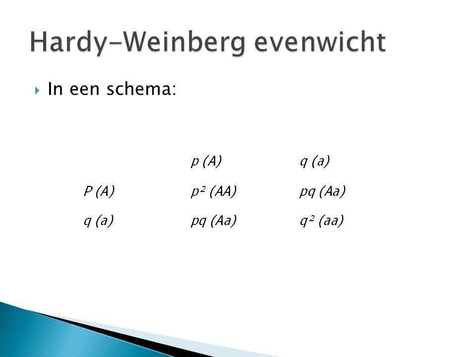  A x A > AA  A x a > Aa  a x A> Aa  a x a> aa  De frequentie waarmee elke combinatie voorkomt is het product van de genfrequentie van beide allelen.