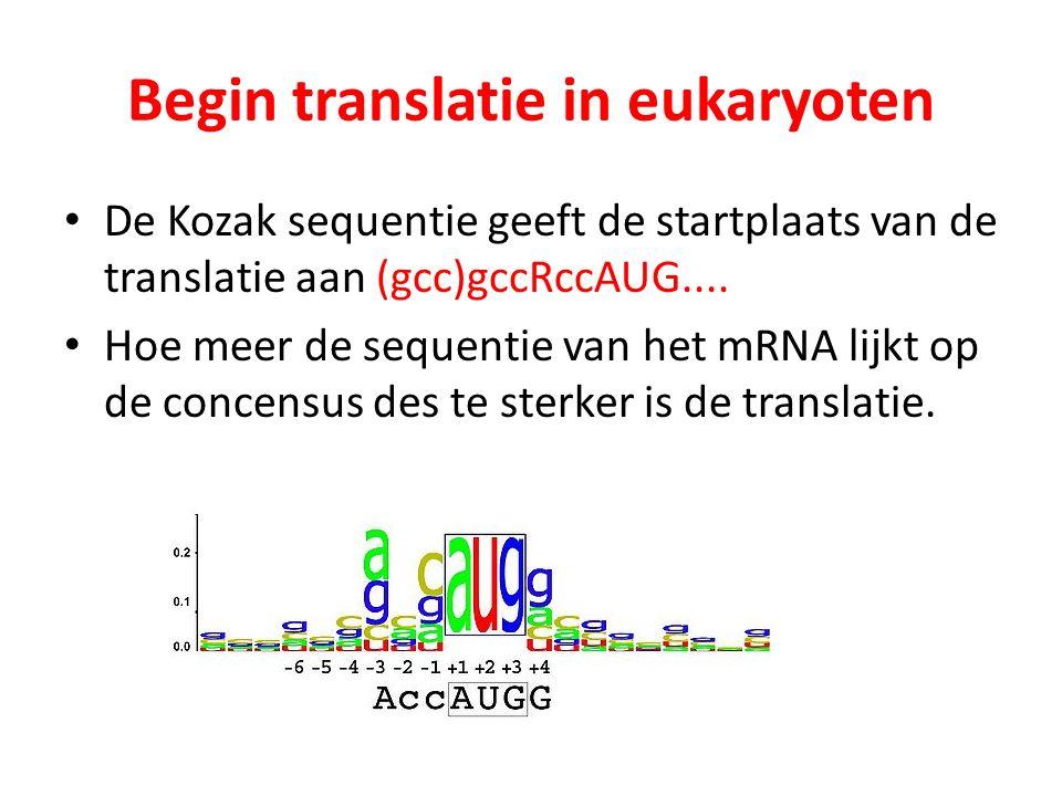 Begin translatie in eukaryoten De Kozak sequentie geeft de startplaats van de translatie aan (gcc)gccRccAUG.... Hoe meer de sequentie van het mRNA lij