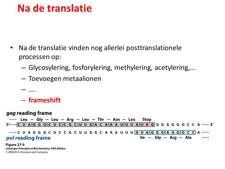 Na de translatie Na de translatie vinden nog allerlei posttranslationele processen op: – Glycosylering, fosforylering, methylering, acetylering,... –