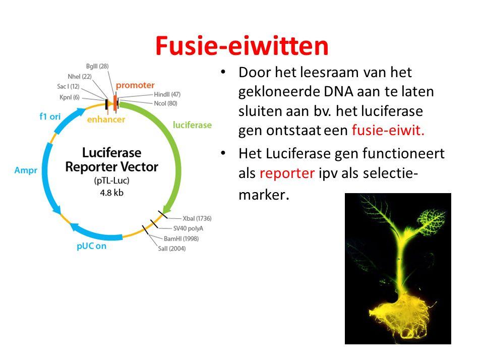 Fusie-eiwitten Door het leesraam van het gekloneerde DNA aan te laten sluiten aan bv. het luciferase gen ontstaat een fusie-eiwit. Het Luciferase gen