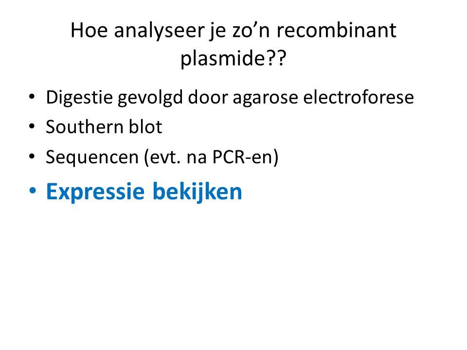 Hoe analyseer je zo'n recombinant plasmide?? Digestie gevolgd door agarose electroforese Southern blot Sequencen (evt. na PCR-en) Expressie bekijken