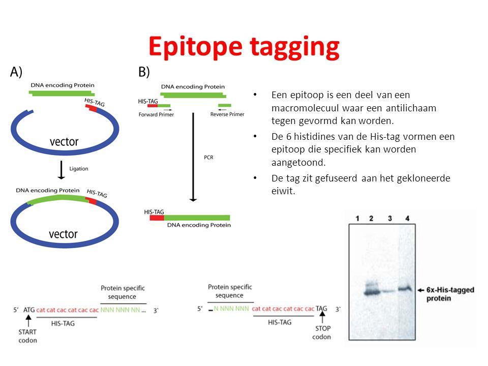 Epitope tagging Een epitoop is een deel van een macromolecuul waar een antilichaam tegen gevormd kan worden. De 6 histidines van de His-tag vormen een