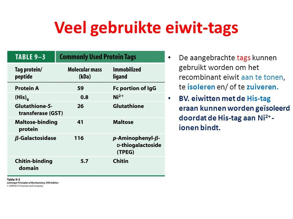 Veel gebruikte eiwit-tags De aangebrachte tags kunnen gebruikt worden om het recombinant eiwit aan te tonen, te isoleren en/ of te zuiveren. BV. eiwit