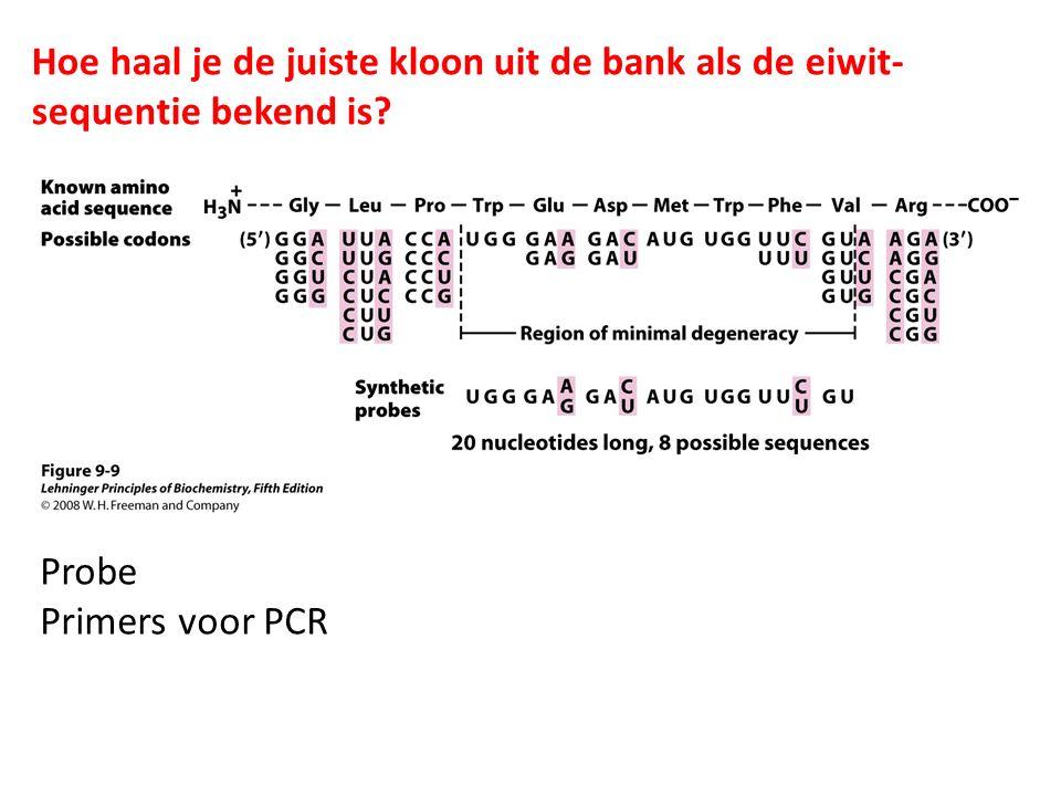 Hoe haal je de juiste kloon uit de bank als de eiwit- sequentie bekend is? Probe Primers voor PCR