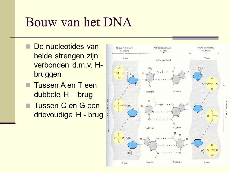 Bouw van het DNA De nucleotides van beide strengen zijn verbonden d.m.v. H- bruggen Tussen A en T een dubbele H – brug Tussen C en G een drievoudige H
