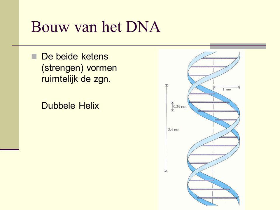 Bouw van het DNA De beide ketens (strengen) vormen ruimtelijk de zgn. Dubbele Helix