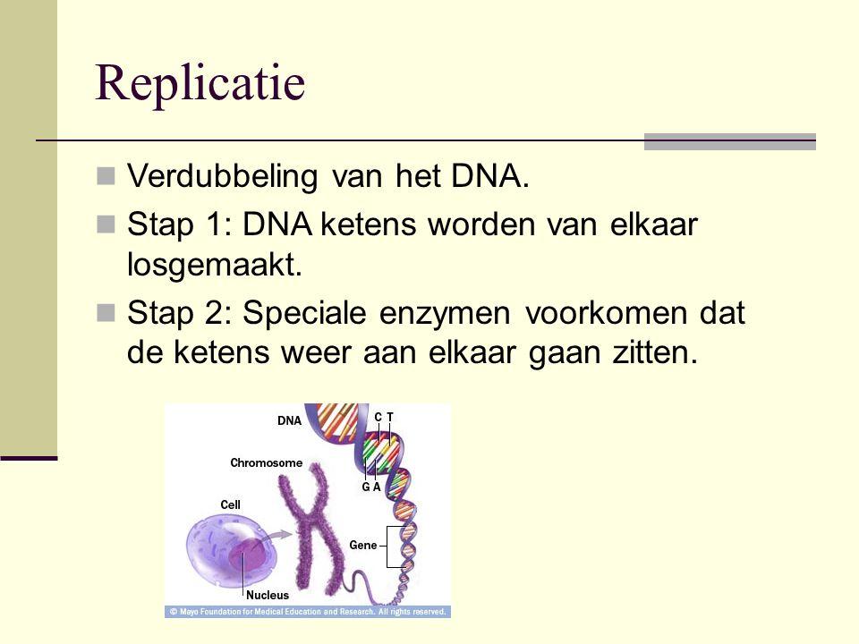Replicatie Verdubbeling van het DNA. Stap 1: DNA ketens worden van elkaar losgemaakt. Stap 2: Speciale enzymen voorkomen dat de ketens weer aan elkaar