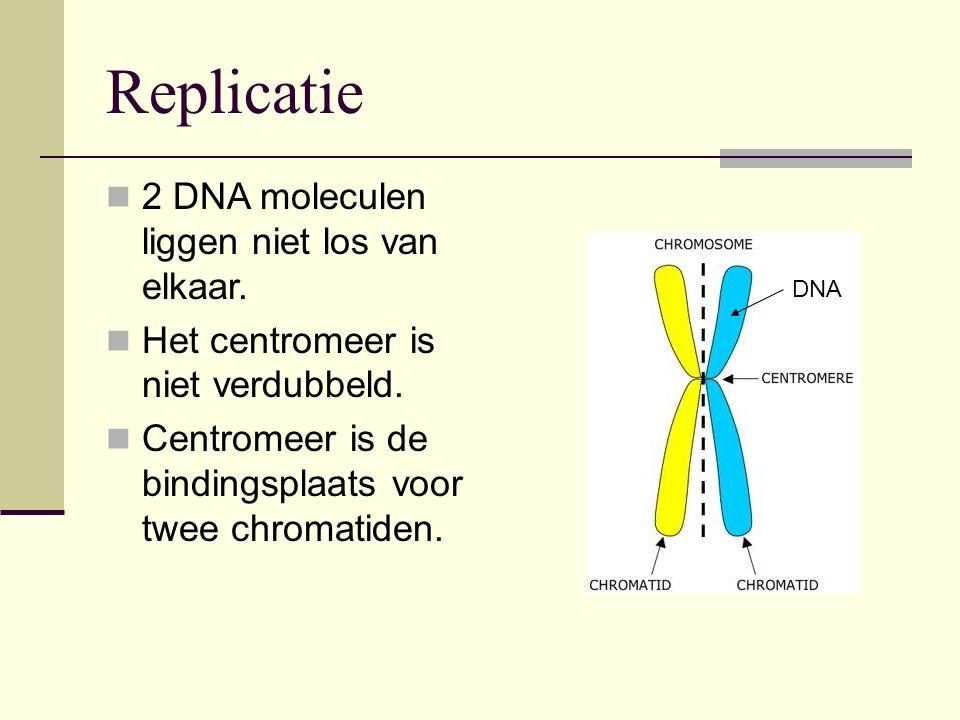 2 DNA moleculen liggen niet los van elkaar. Het centromeer is niet verdubbeld. Centromeer is de bindingsplaats voor twee chromatiden. DNA