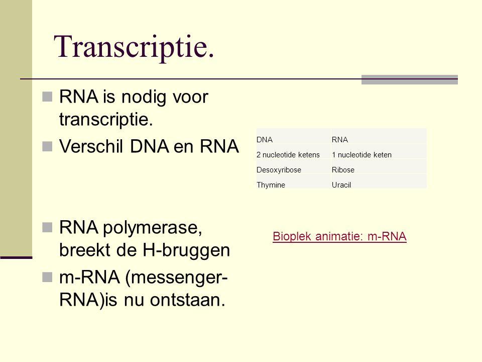 Transcriptie. RNA is nodig voor transcriptie. Verschil DNA en RNA RNA polymerase, breekt de H-bruggen m-RNA (messenger- RNA)is nu ontstaan. DNARNA 2 n