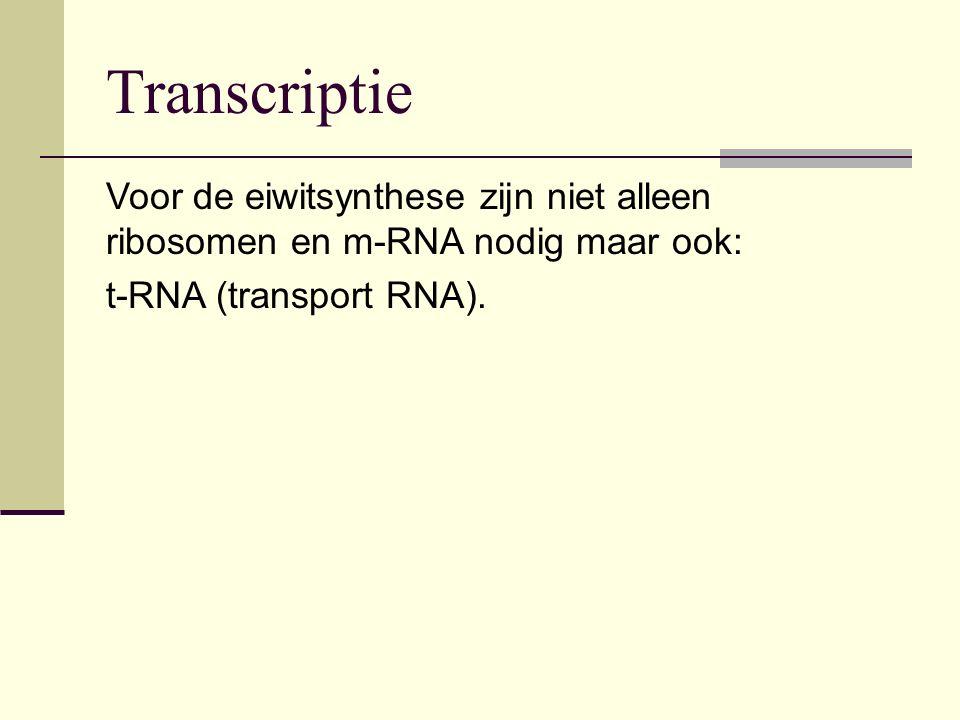 Voor de eiwitsynthese zijn niet alleen ribosomen en m-RNA nodig maar ook: t-RNA (transport RNA). Transcriptie