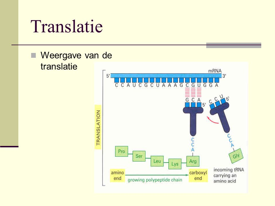 Translatie Weergave van de translatie