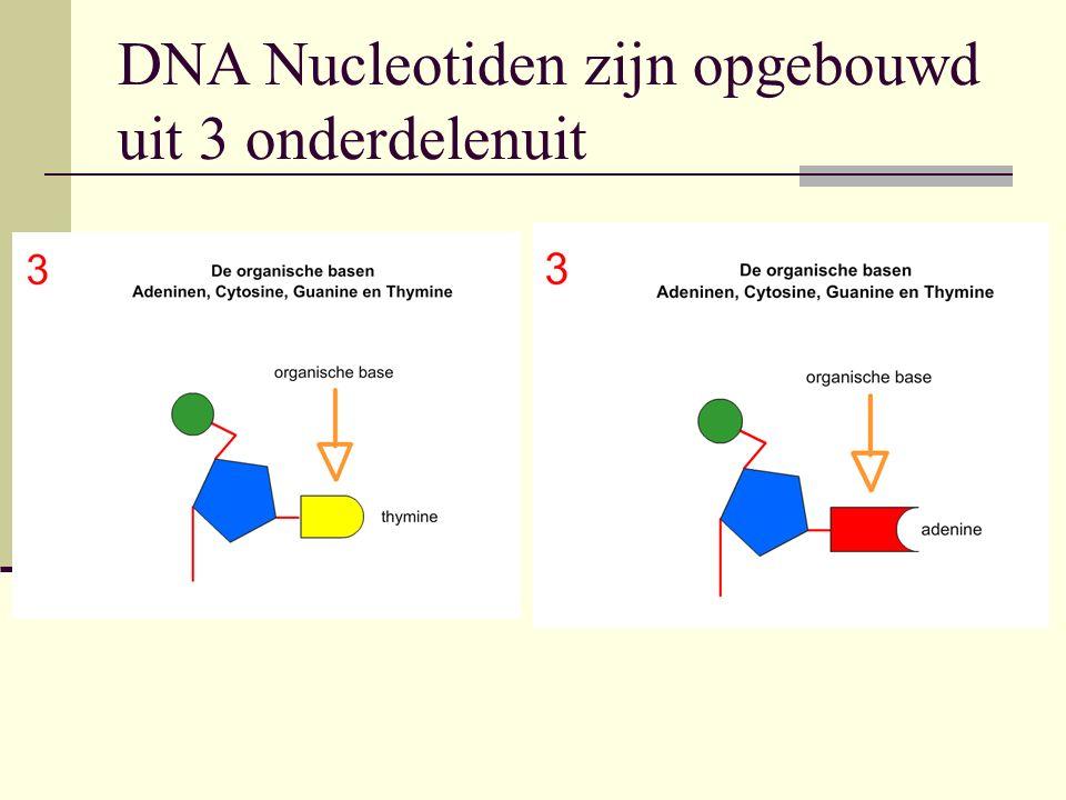 DNA Nucleotiden zijn opgebouwd uit 3 onderdelenuit