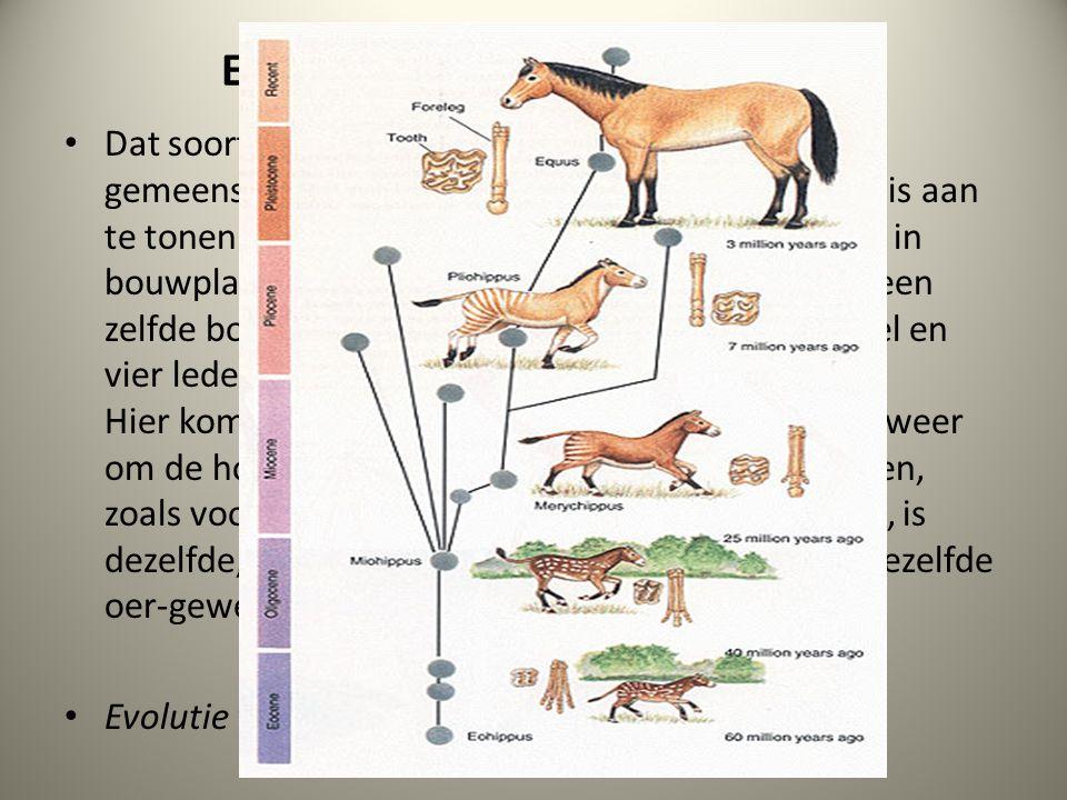 Extra: Bouwplannen vergelijken Dat soorten zich in de loop van de tijd uit een gemeenschappelijke voorouder hebben gevormd, is aan te tonen door de ov