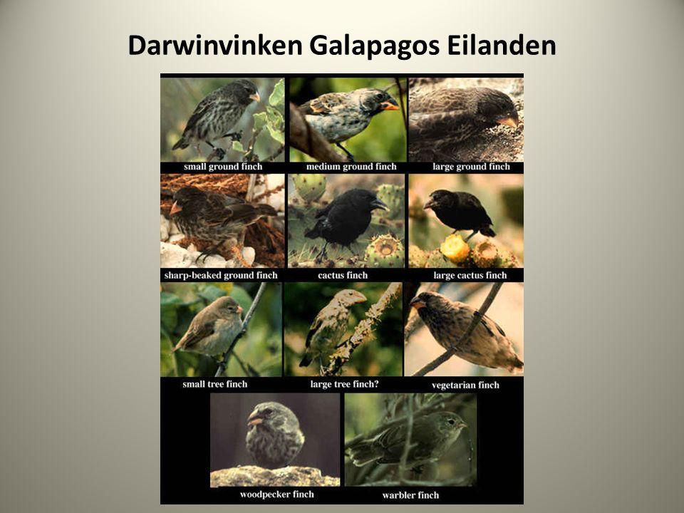 Darwinvinken Galapagos Eilanden