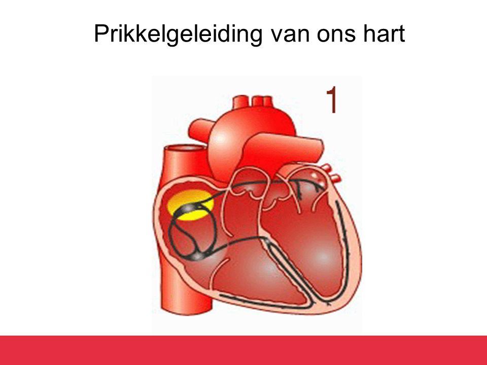 Prikkelgeleiding van ons hart