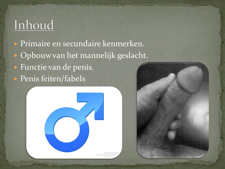 Primaire en secundaire kenmerken. Opbouw van het mannelijk geslacht. Functie van de penis. Penis feiten/fabels