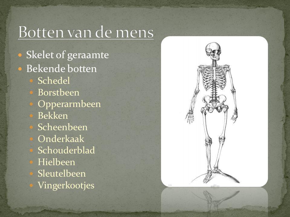 Skelet of geraamte Bekende botten Schedel Borstbeen Opperarmbeen Bekken Scheenbeen Onderkaak Schouderblad Hielbeen Sleutelbeen Vingerkootjes