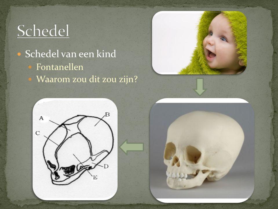 Schedel van een kind Fontanellen Waarom zou dit zou zijn?
