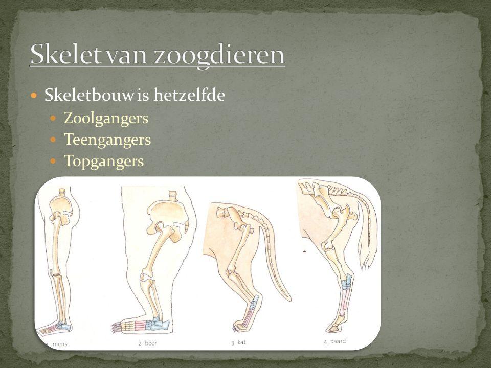 Twee type beenweefsel in je lichaam Kraakbeen Lijmstof Beenweefsel Kalkzouten Tussencelstof en de verandering Kraakbeen wordt been weefsel