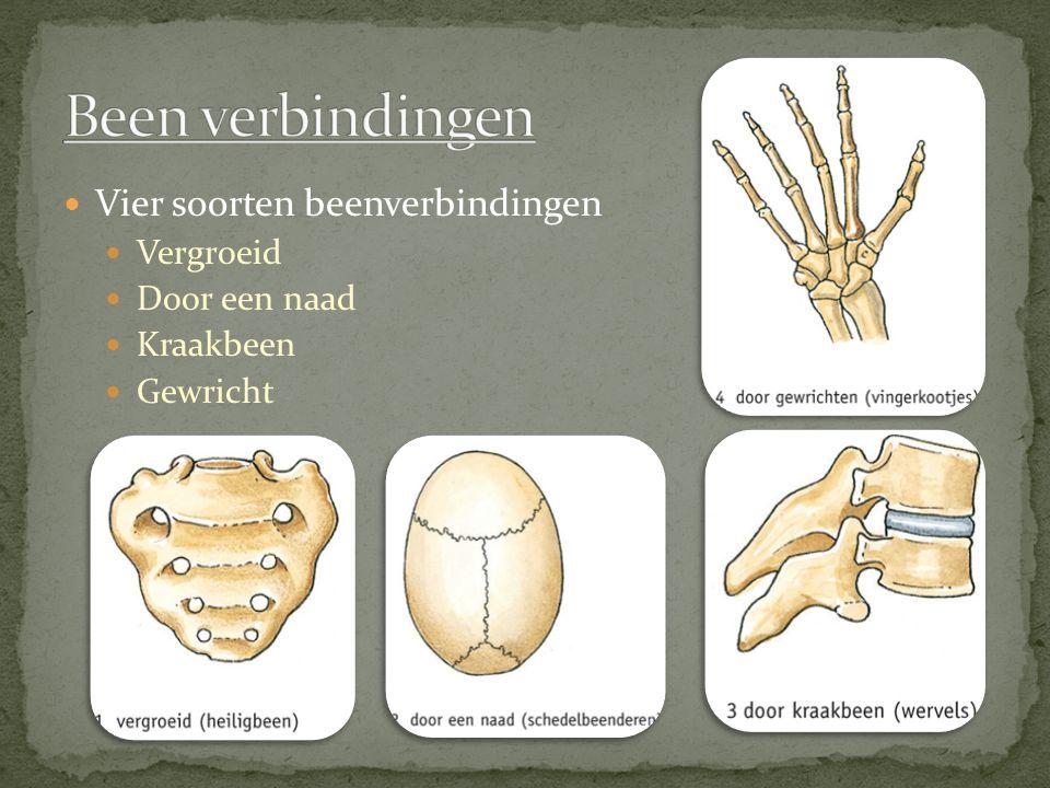 Vier soorten beenverbindingen Vergroeid Door een naad Kraakbeen Gewricht