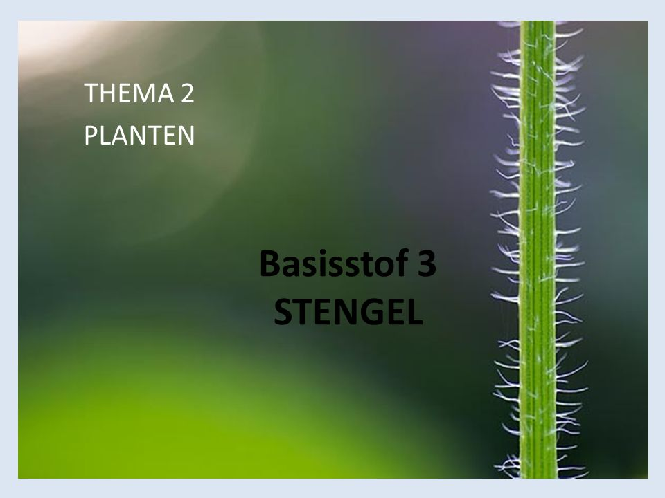 Basisstof 3 STENGEL THEMA 2 PLANTEN
