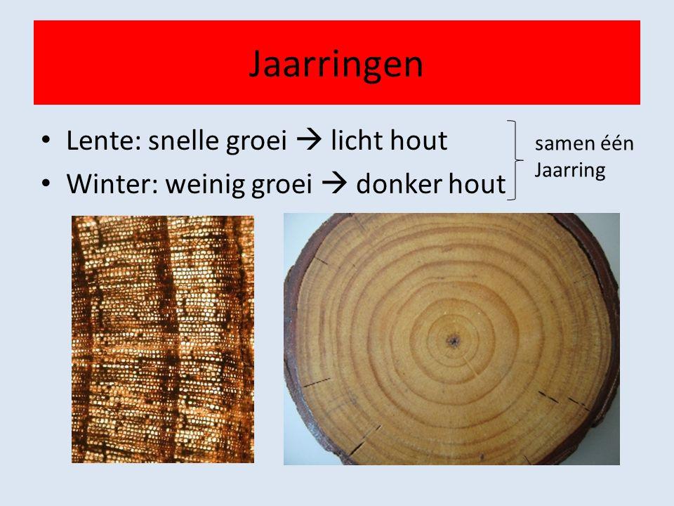 Jaarringen Lente: snelle groei  licht hout Winter: weinig groei  donker hout samen één Jaarring