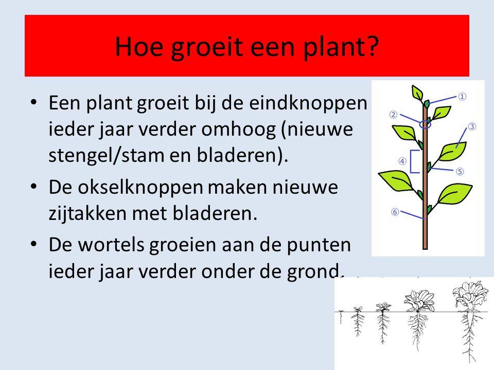 Hoe groeit een plant.