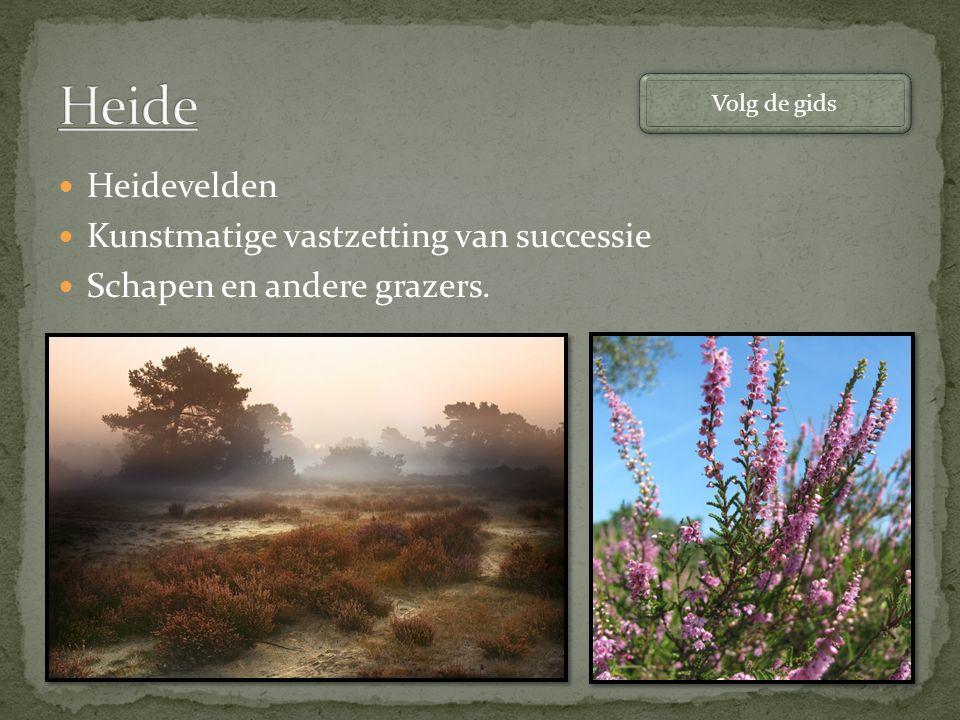Heidevelden Kunstmatige vastzetting van successie Schapen en andere grazers. Volg de gids