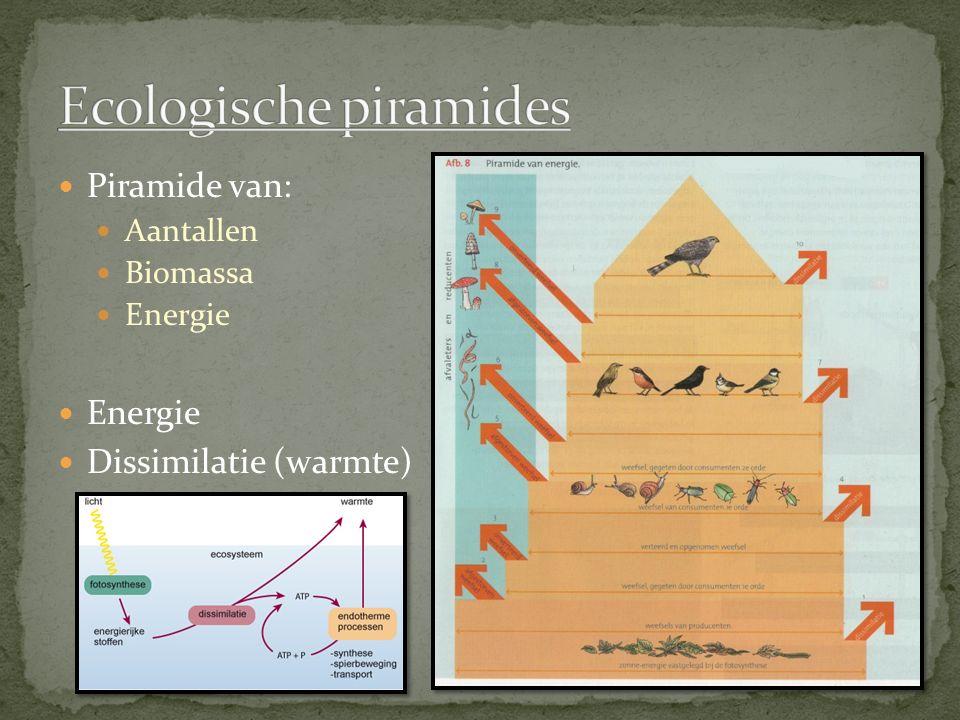 Piramide van: Aantallen Biomassa Energie Dissimilatie (warmte)