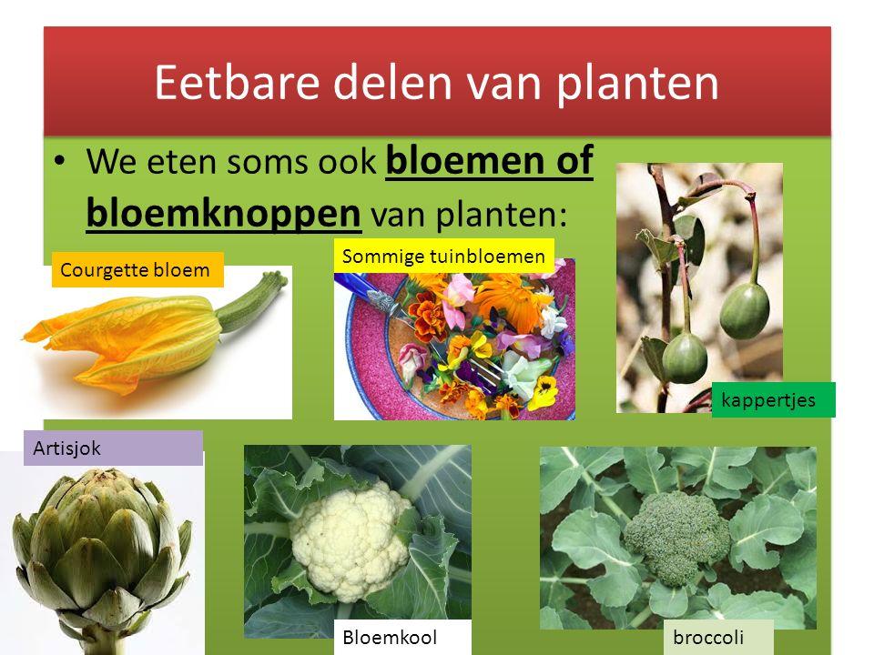 We eten soms ook bloemen of bloemknoppen van planten: Eetbare delen van planten Courgette bloem broccoliBloemkool Artisjok Sommige tuinbloemen kappert