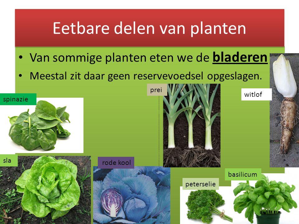 Van sommige planten eten we de bladeren Meestal zit daar geen reservevoedsel opgeslagen. Van sommige planten eten we de bladeren Meestal zit daar geen