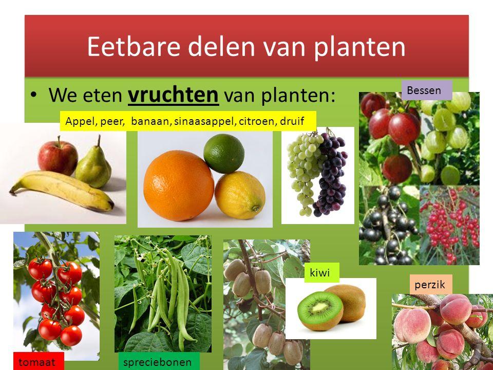 We eten vruchten van planten: Eetbare delen van planten Appel, peer, banaan, sinaasappel, citroen, druif Bessen tomaatspreciebonen kiwi perzik