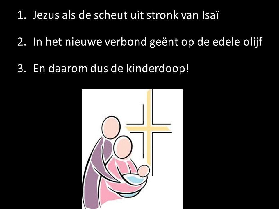 1.Jezus als de scheut uit stronk van Isaï 2.In het nieuwe verbond geënt op de edele olijf 3.En daarom dus de kinderdoop!
