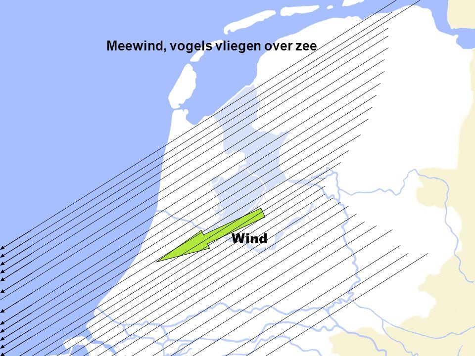 Meewind, vogels vliegen over zee Wind