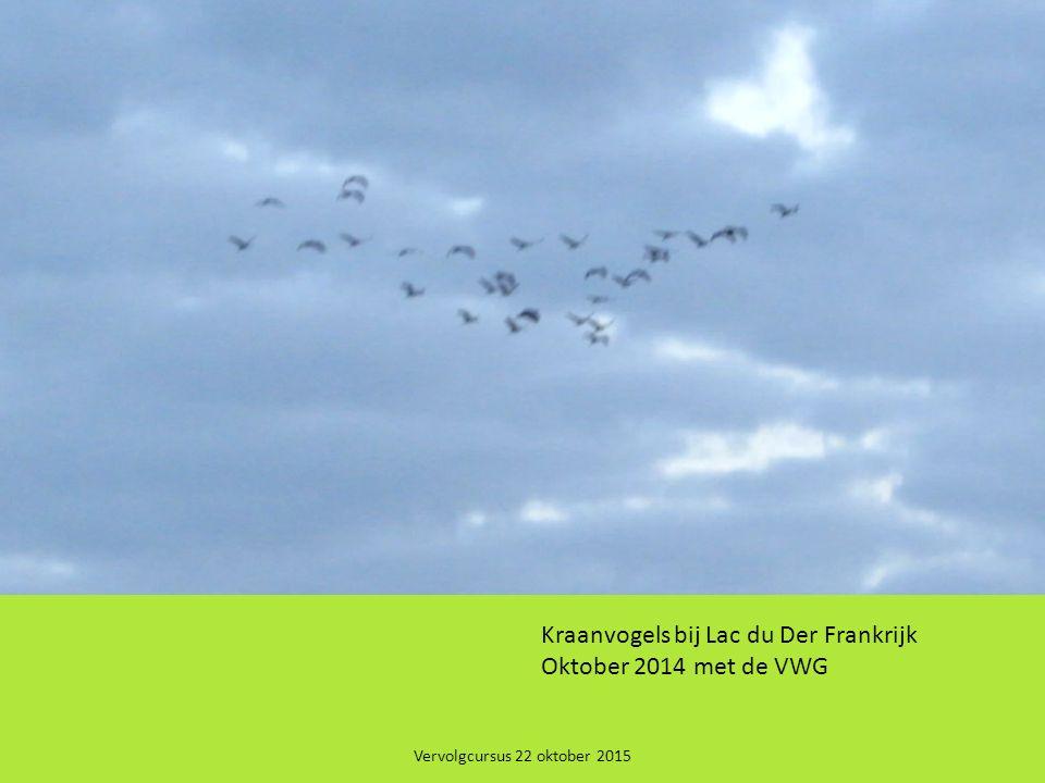Vervolgcursus 22 oktober 2015 P P Kraanvogels bij Lac du Der Frankrijk Oktober 2014 met de VWG
