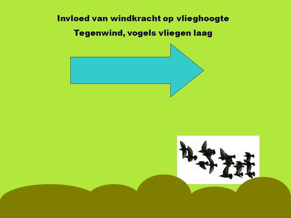 Invloed van windkracht op vlieghoogte Tegenwind, vogels vliegen laag