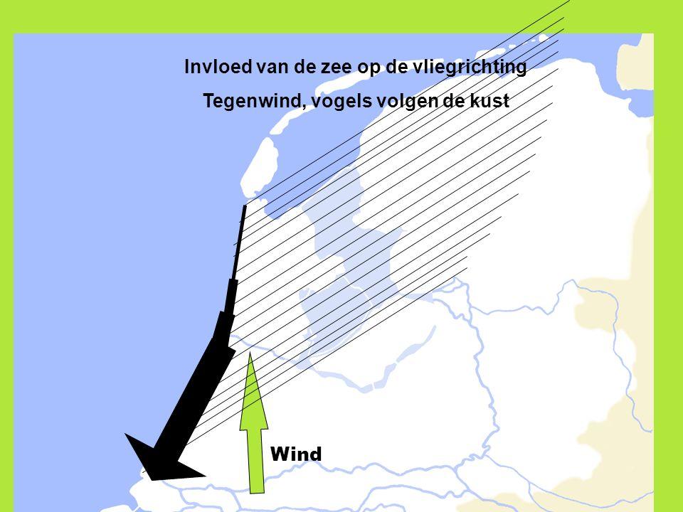 Invloed van de zee op de vliegrichting Tegenwind, vogels volgen de kust Wind