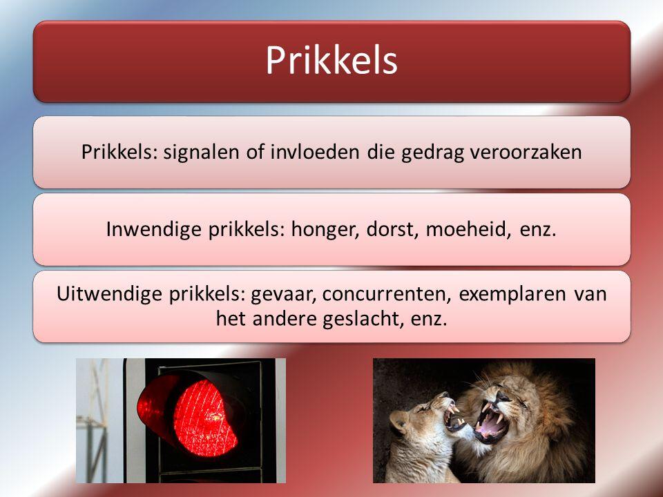 Prikkels Prikkels: signalen of invloeden die gedrag veroorzakenInwendige prikkels: honger, dorst, moeheid, enz.
