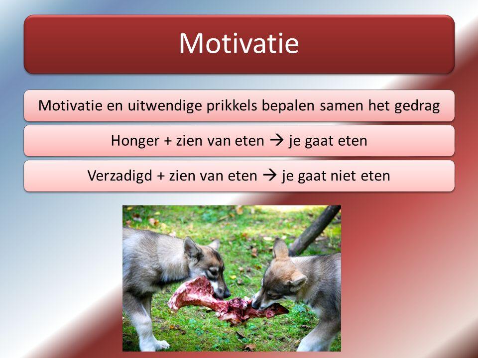 Motivatie Motivatie en uitwendige prikkels bepalen samen het gedragHonger + zien van eten  je gaat etenVerzadigd + zien van eten  je gaat niet eten