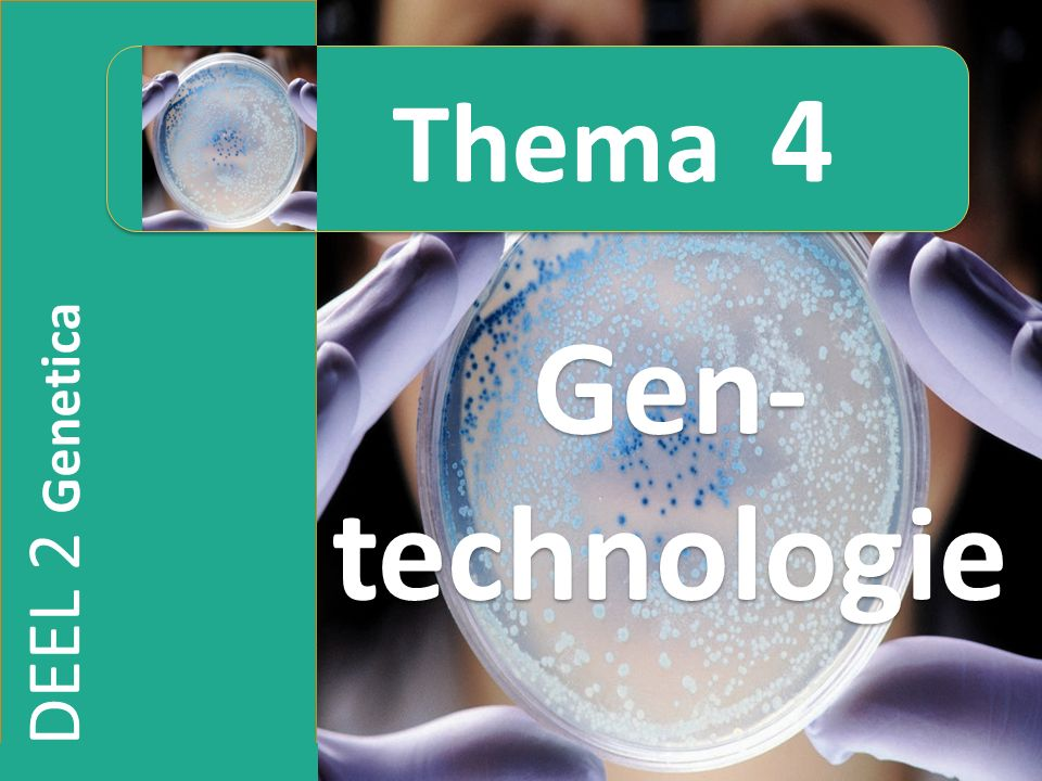 4.2 Gentechnologie in de landbouw en voedingsindustrie Insectenresistente gewassen Gen voor insectentoxine van Bacillus thuringiensis (Bt) overbrengen naar planten via tumor-inducing-plasmide (Ti) van Agrobacterium tumefaciens (volgende dia) Bt-tabak BT-maïs ( stengelboorder) Bt-katoen ( rups) Bt-aardappel ( coloradokever)