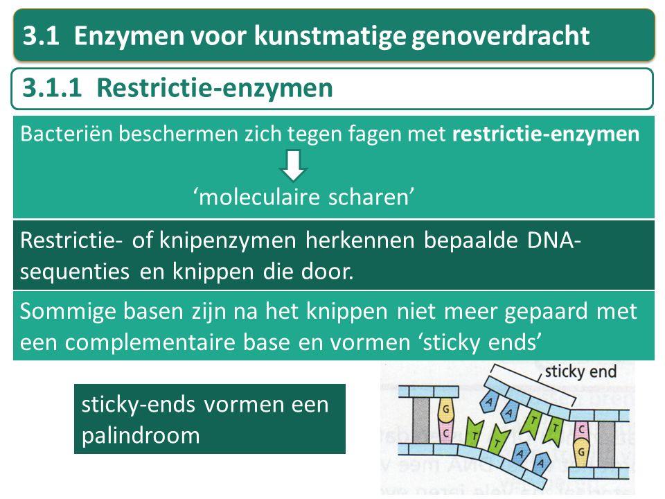 Restrictie- of knipenzymen herkennen bepaalde DNA- sequenties en knippen die door. Sommige basen zijn na het knippen niet meer gepaard met een complem