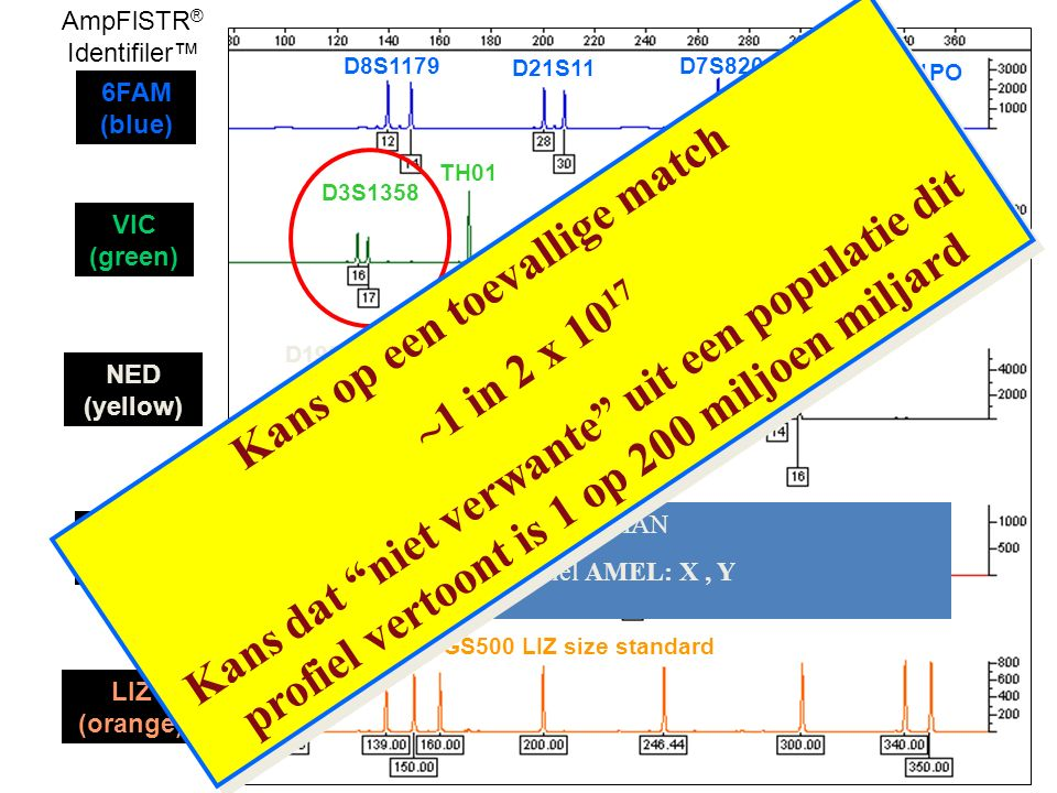 D8S1179 D21S11 D7S820 CSF1PO D3S1358 TH01 D13S317 D16S539 D2S1338 D19S433 D18S51 TPOX VWA AMEL D5S818 FGA GS500 LIZ size standard 6FAM (blue) VIC (gre