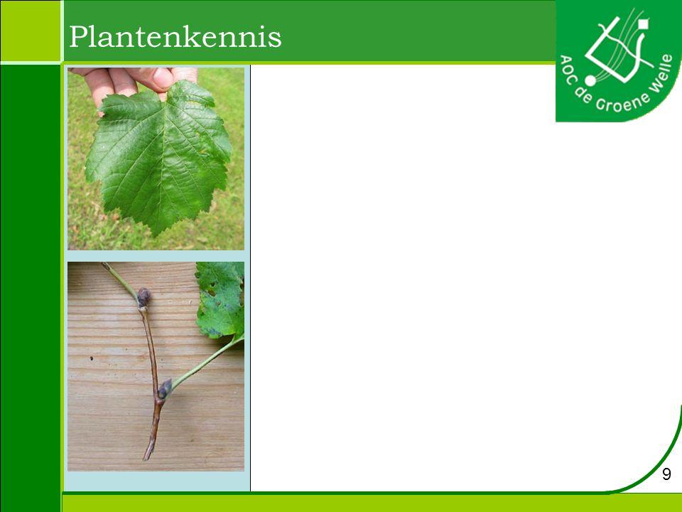 Plantenkennis 9