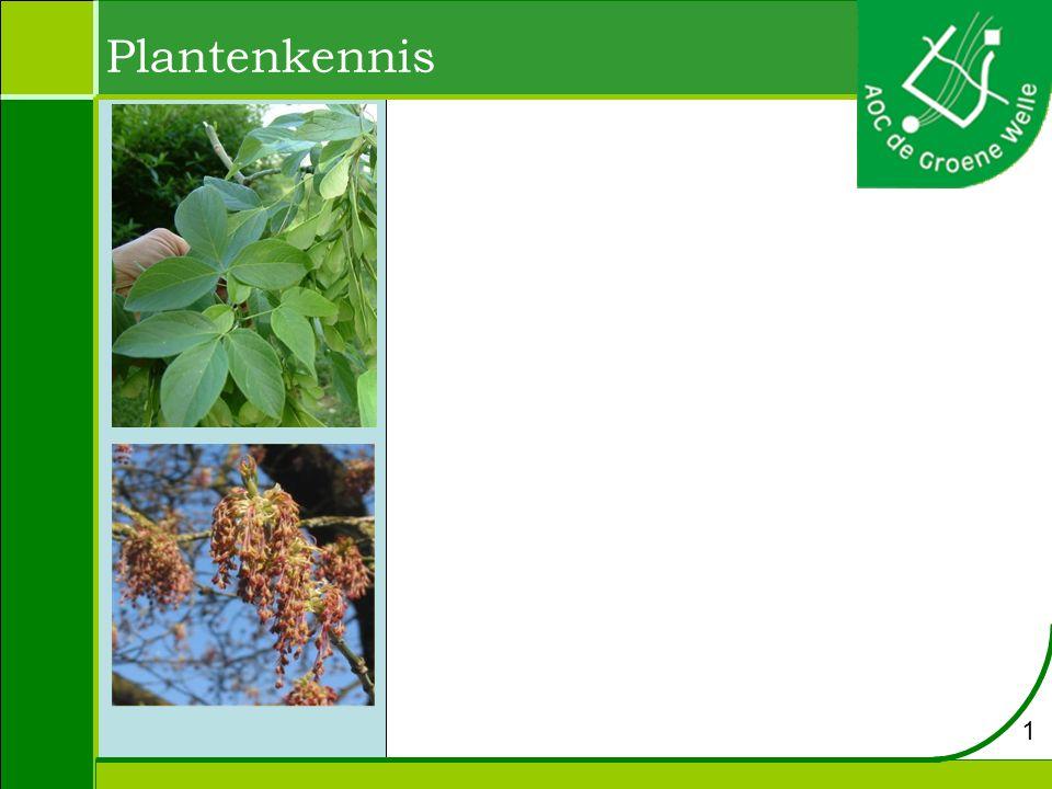 Plantenkennis 1