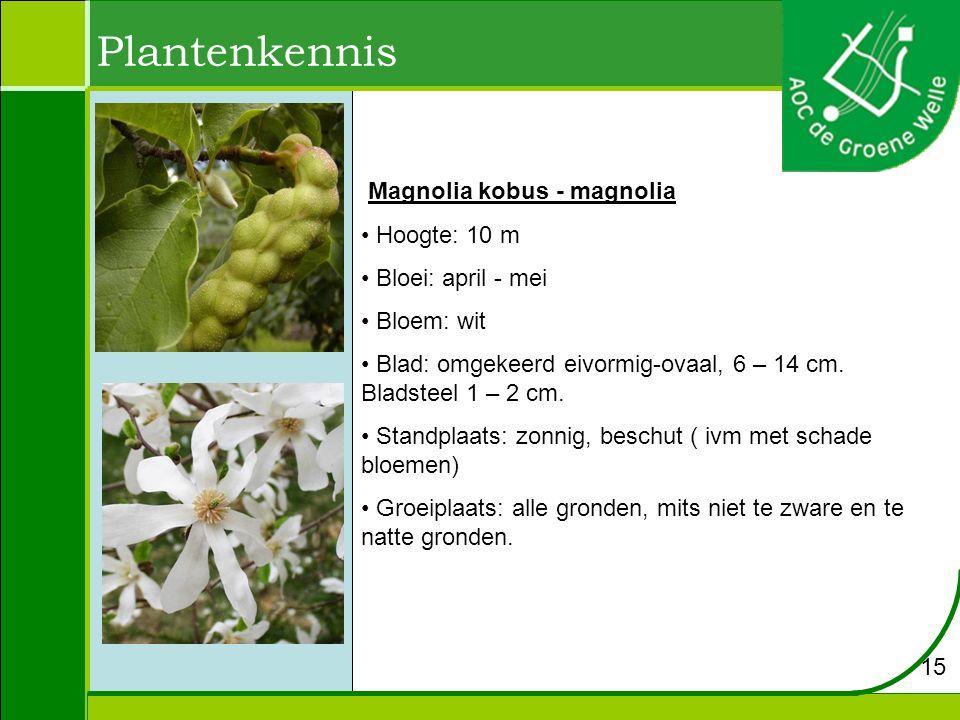 Plantenkennis Magnolia kobus - magnolia Hoogte: 10 m Bloei: april - mei Bloem: wit Blad: omgekeerd eivormig-ovaal, 6 – 14 cm. Bladsteel 1 – 2 cm. Stan