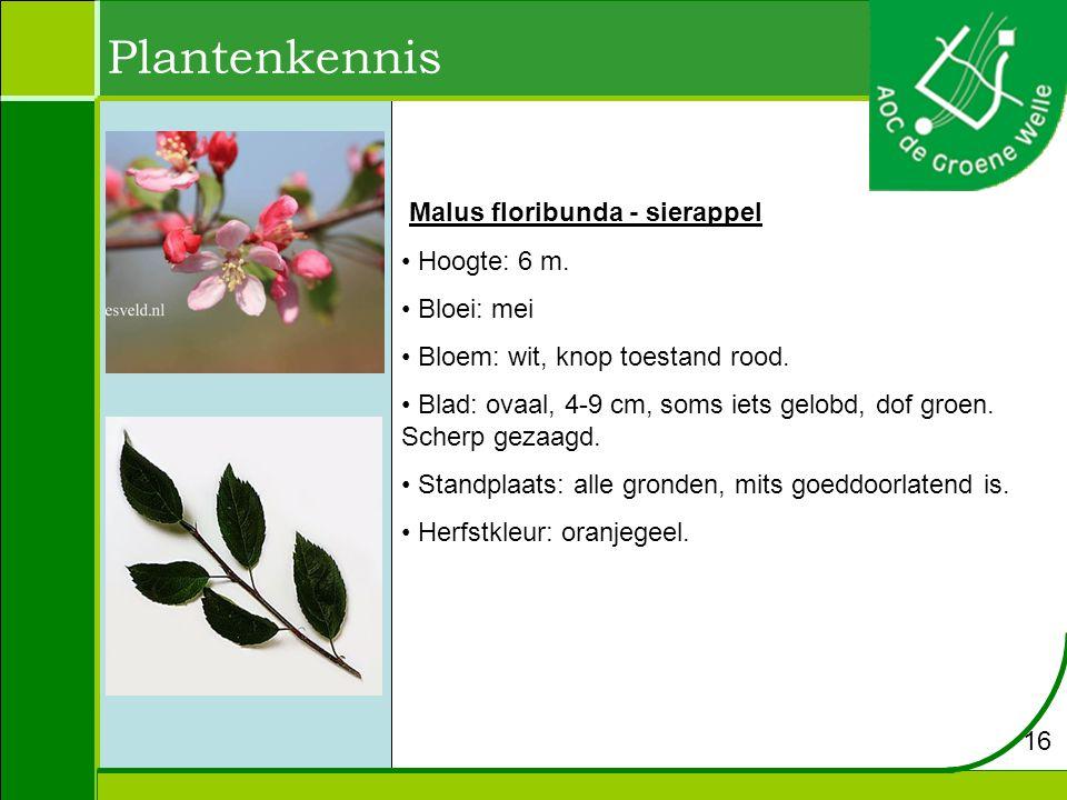Plantenkennis Malus floribunda - sierappel Hoogte: 6 m. Bloei: mei Bloem: wit, knop toestand rood. Blad: ovaal, 4-9 cm, soms iets gelobd, dof groen. S