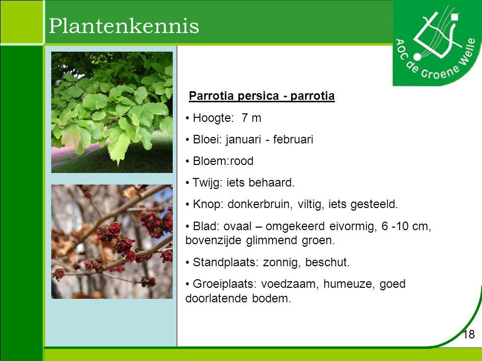 Plantenkennis Parrotia persica - parrotia Hoogte: 7 m Bloei: januari - februari Bloem:rood Twijg: iets behaard. Knop: donkerbruin, viltig, iets gestee