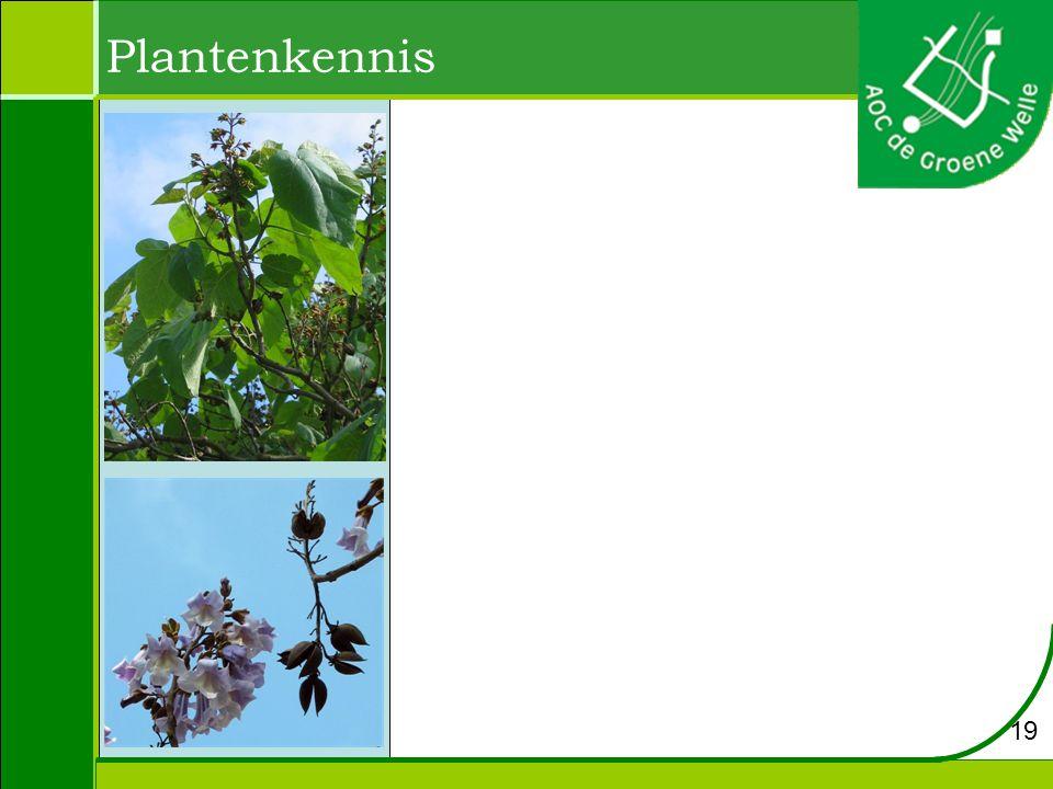 Plantenkennis 19