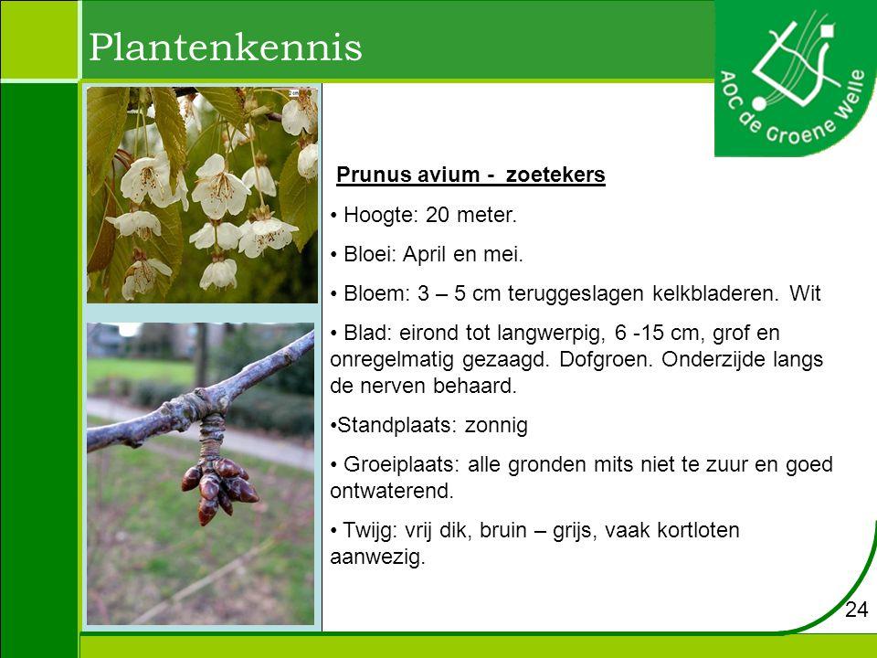 Plantenkennis Prunus avium - zoetekers Hoogte: 20 meter. Bloei: April en mei. Bloem: 3 – 5 cm teruggeslagen kelkbladeren. Wit Blad: eirond tot langwer